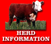 Gregory Polled Herefords - Herd Information